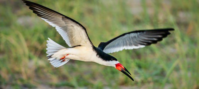 BEACH BIRDS OF FLORIDA